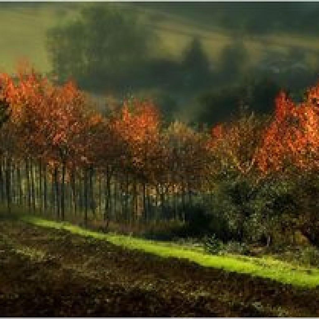 Autumn Macerata - Marche - Italy