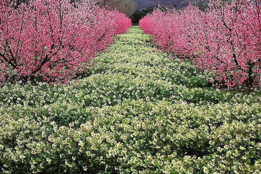 Flowery field - Marche - Italy