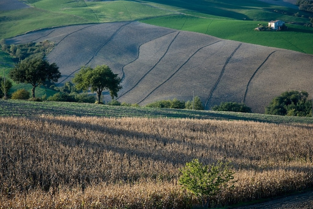 Hills - Cesane - Marche - Italy