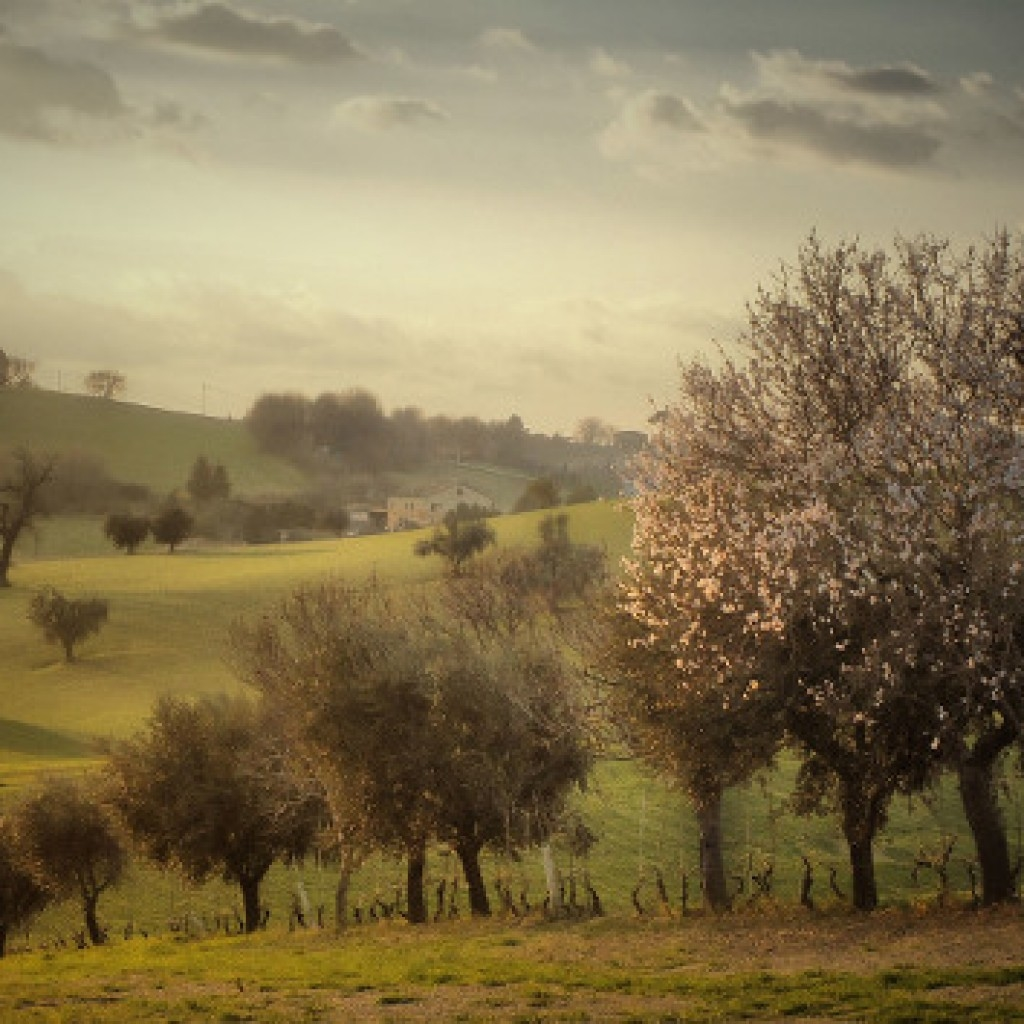 Spring smell Macerata - Marche - Italy