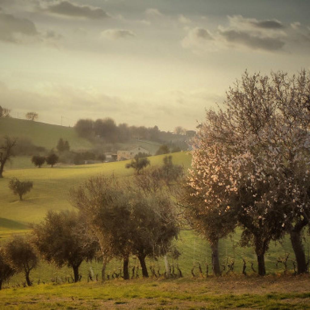 Spring smell Macerata - Marche - Italy