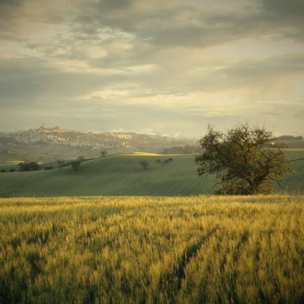 wheat field Macerata - Marche - Italy